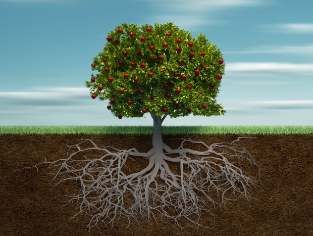 Tree with apple and root - 3d render illustration